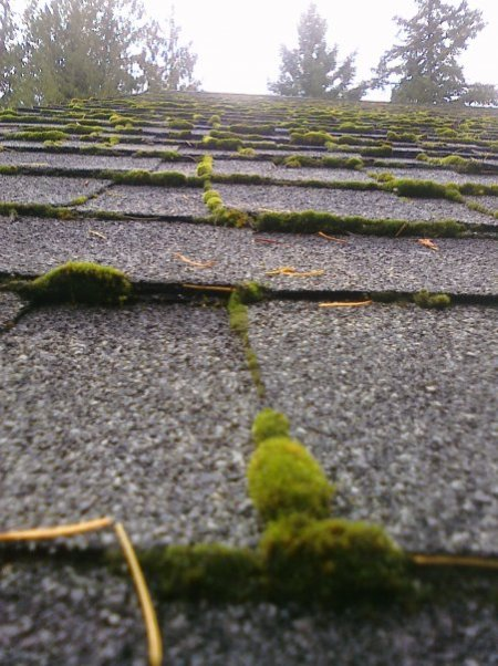 North West Roof Moss
